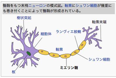 myeline.png